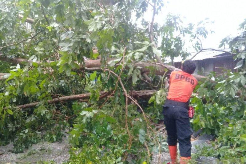 Rumah warga Agam tertimpa pohon tumbang saat angin kencang