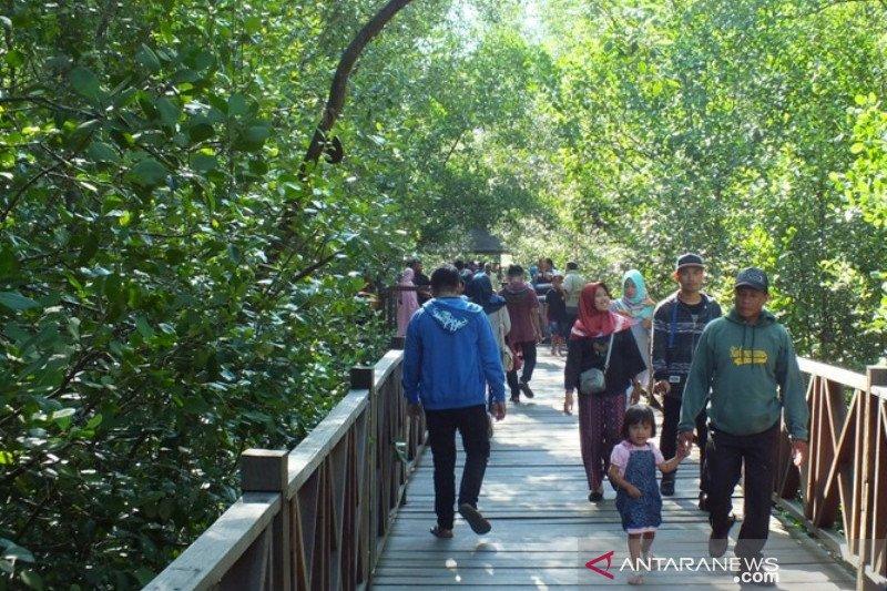 Perlindungan 3,49 juta hektare mangrove lebih penting dari rehabilitasi