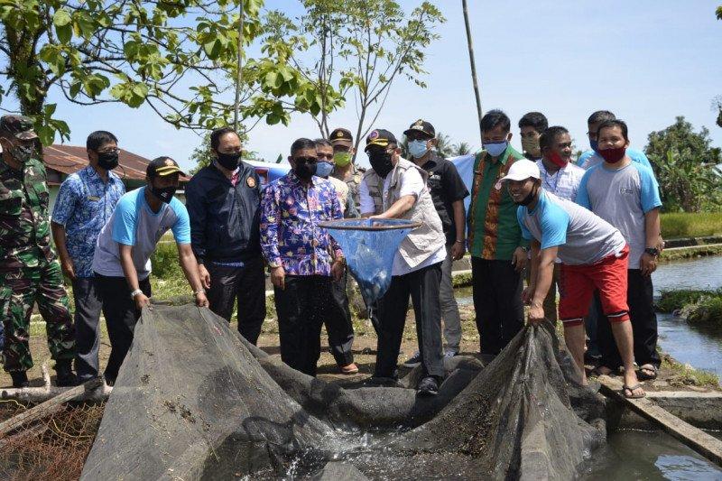 Karang Taruna di Padang budidayakan ikan air tawar, hasil panen capai satu ton