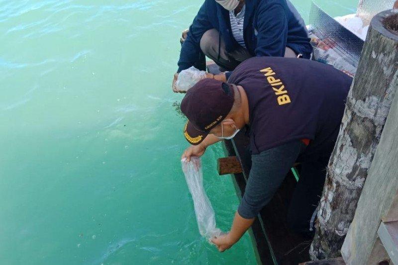 KKP: Ekspor benih bening lobster tidak akan lagi ada