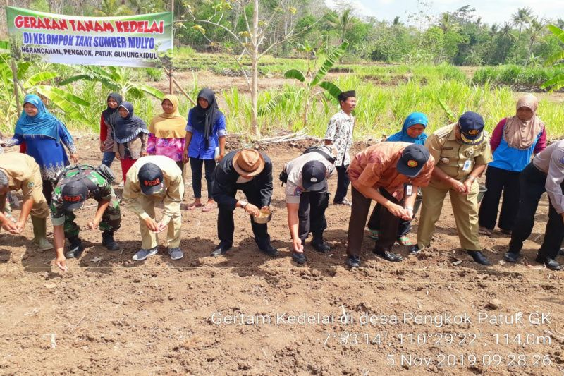 Luas tanam padi dan palawija di Gunung Kidul 55.782 hektare