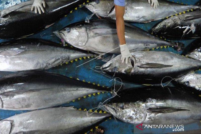 Ekspor ikan tuna dan udang lobster Kota Padang terhenti sejak pandemi COVID-19