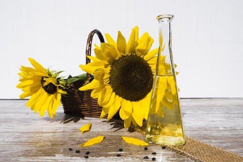 Deretan manfaat minyak bunga matahari untuk kecantikan