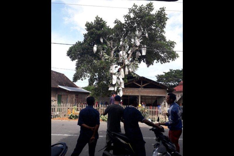Ingin bungkus buah nangka di pohon, seorang pria di Dompu malah kesetrum listrik dan meninggal