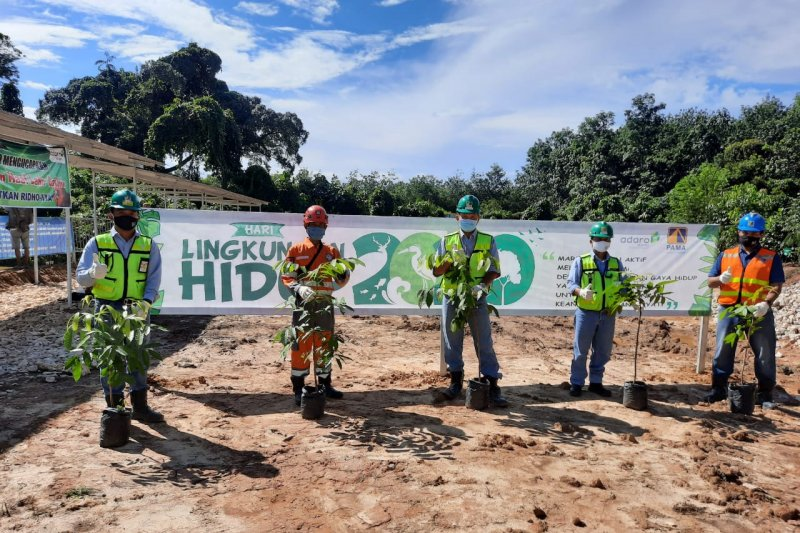 PT Pama plants trees on World Environment Day