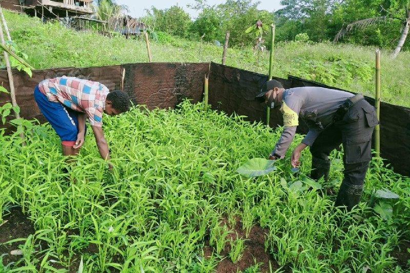 Bhabinkamtibmas Polres Biak sambangi kebun warga binaan kampung Wasori