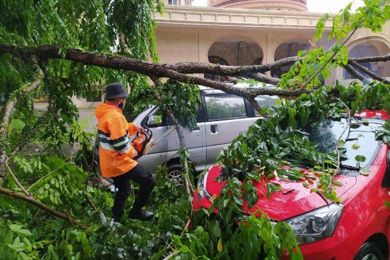 Pohon tumbang timpa dua mobil akibat hujan disertai angin kencang