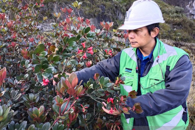 Freeport temukan spesies tumbuhan baru di Papua