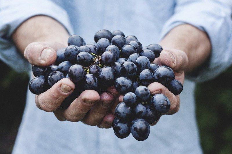 Sayur dan buah organik makin dicari seiring meningkatnya gaya hidup sehat masyarakat