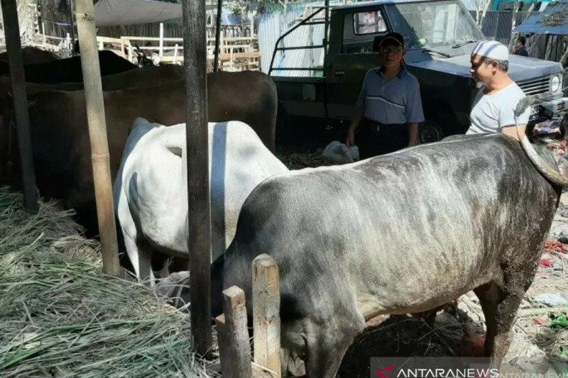 Pemkot Bogor berencana pelatihan dan simulasi pemotongan hewan kurban