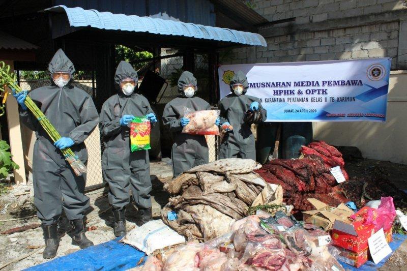 Karantina Pertanian  Tanjung Balai Karimun musnahkan 1,5 ton bawang