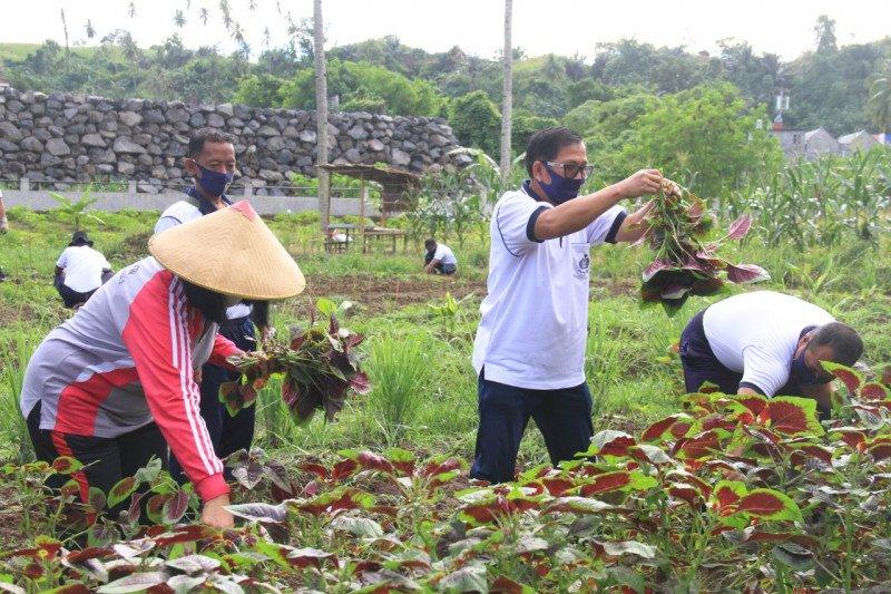 Danlantamal VIII pimpin panen sayur di lahan ketahananan pangan