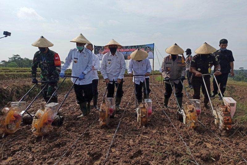 Pairin targetkan panen jagung di Metro capai 6 ton per hektare