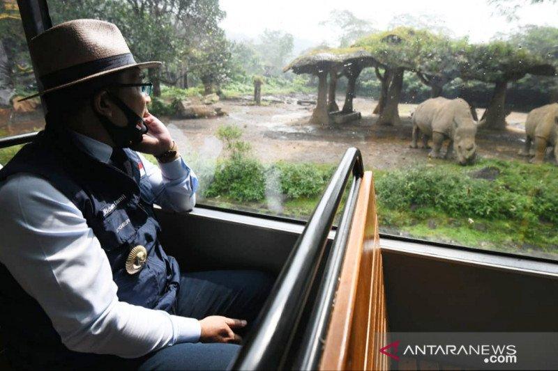 Ridwan Kamil izinkan Taman Safari Bogor kembali buka dengan beberapa alasan
