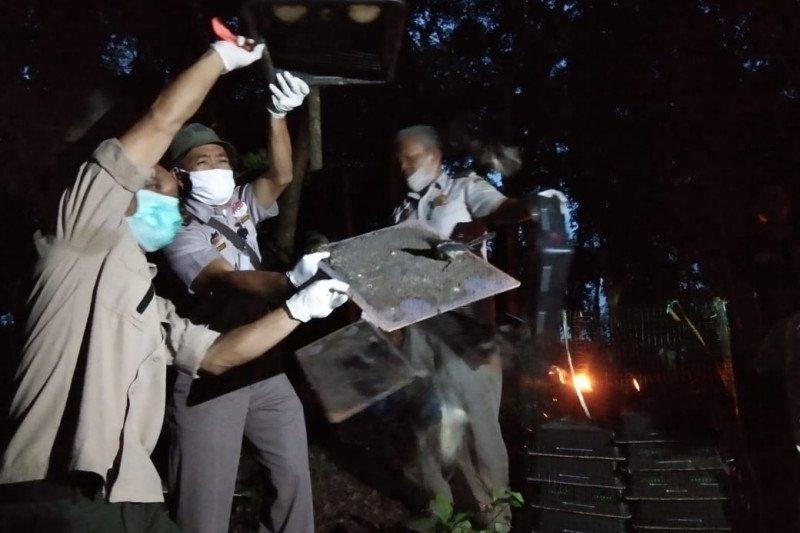 Ratusan burung kacer hasil penahanan Karantina Pertanian Lampung dilepasliarkan