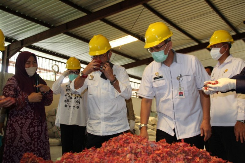 Karantina Pertanian Manado fumigasi bunga pala diekspor ke India