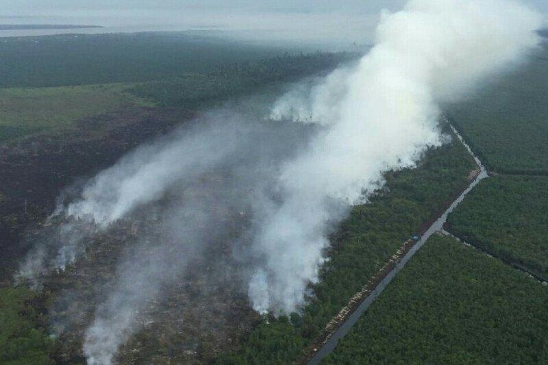 Delapan hektare lahan gambut terbakar di Rupat