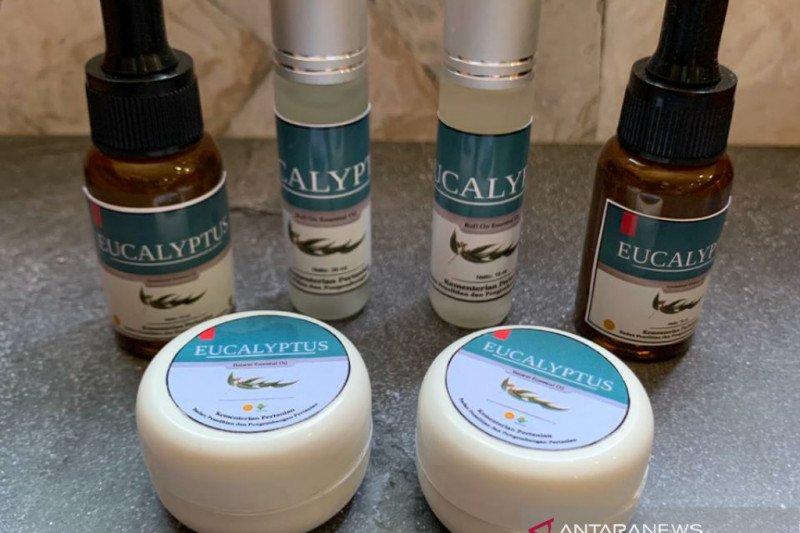 Antivirus eucalyptus untuk COVID-19 diproduksi massal oleh swasta