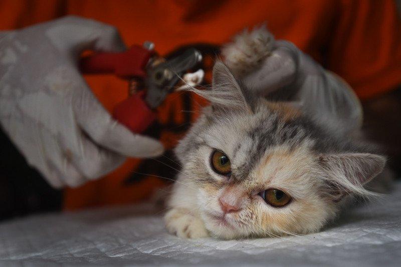 Dokter hewan bagikan tips merawat kucing lokal
