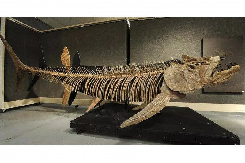 Fosil ikan raksasa 70 juta tahun ditemukan di Patagonia