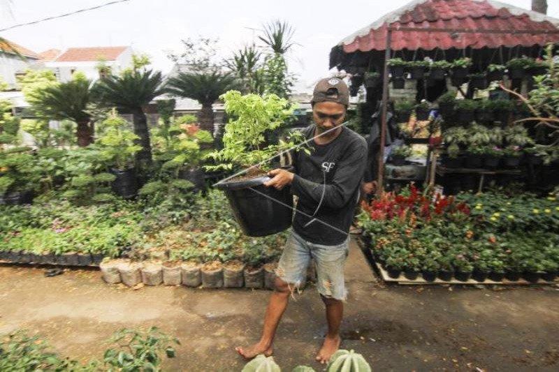 Penjualan Tanaman Hias Meningkat