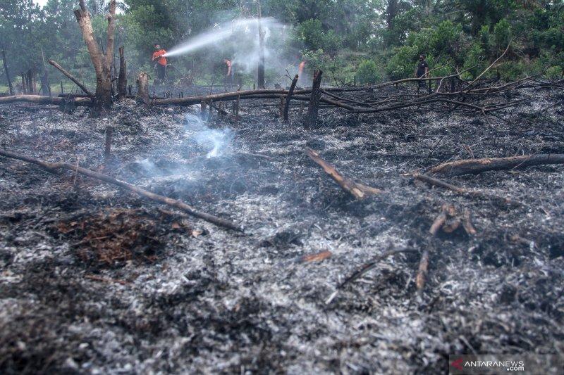 Bertahap Mncn Pupuk Pendapatan Iklan Digital: Kebakaran Lahan Di Pekanbaru