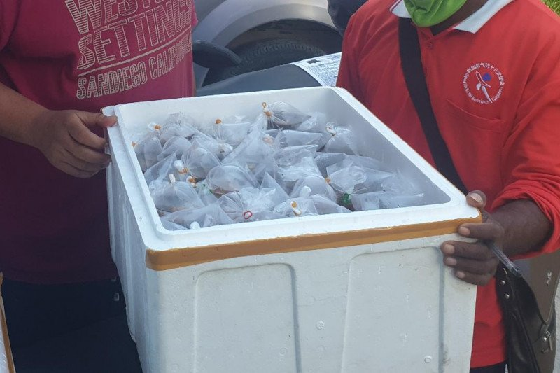 Ribuan ekor anemon laut dibawa keluar NTT oleh pengusaha secara ilegal