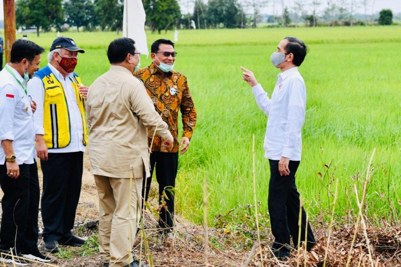 Presiden: Perlu lumbung pangan baru antisipasi krisis pangan
