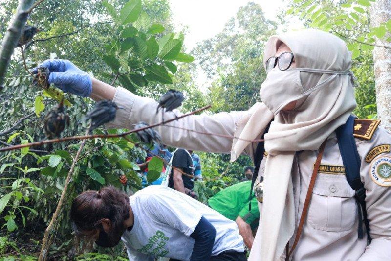 Karantina Pertanian Lampung gagalkan penyelundupan 2.074 ekor burung asal Sumatera