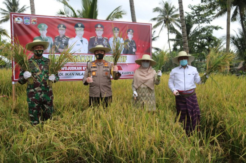 Perkuat Ketahanan Pangan, Polda NTB panen raya di Kampung Sehat Nurut Tatanan Baru Lombok Timur