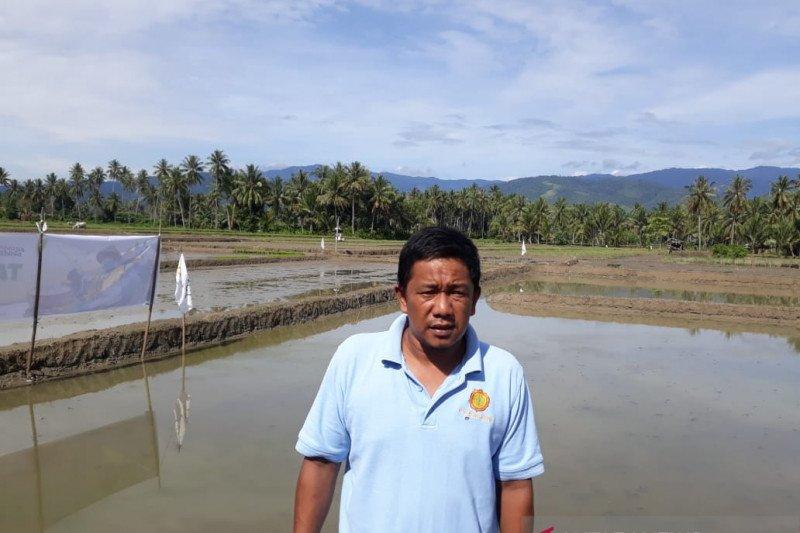 Sebagian petani Sigi  alami keterlambatan benih padi saat bertani