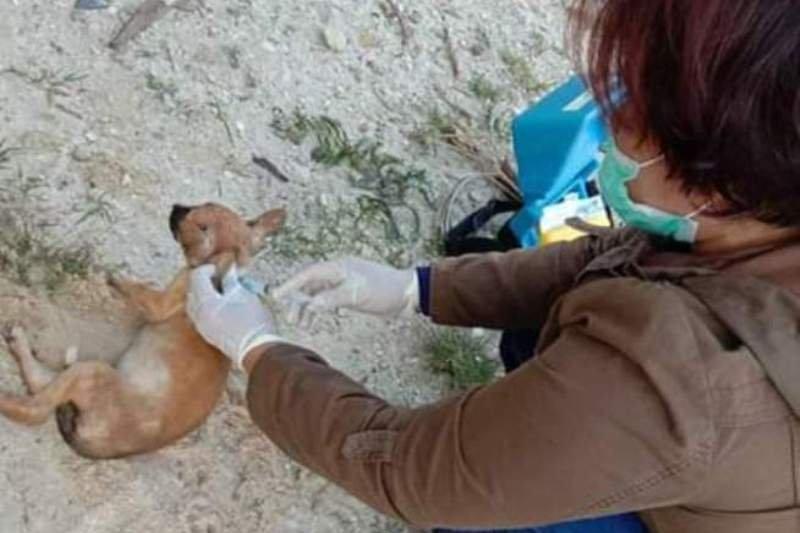 Cegah rabies, Distan Gumas telah vaksin 933 ekor hewan