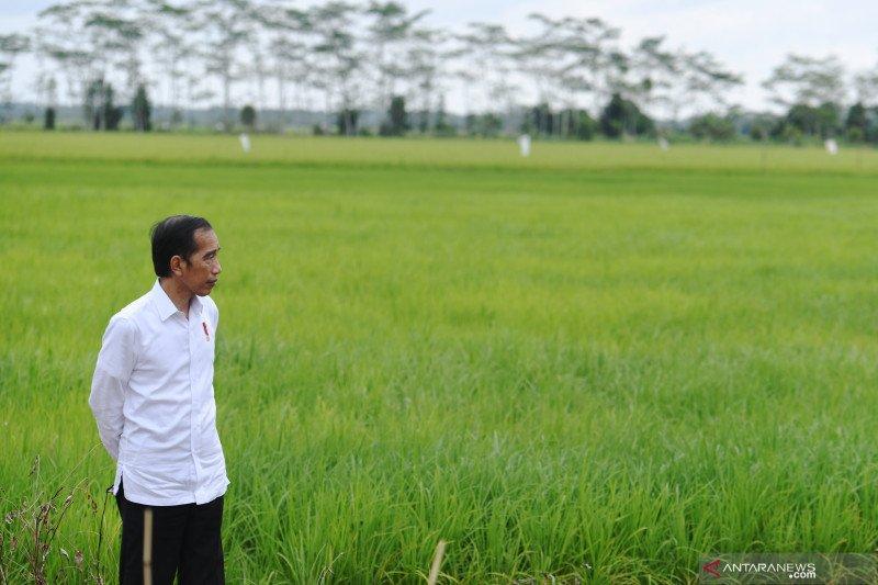 """Presiden ungkap rencana perluasan """"food estate"""" ke  NTT, Papua dan Sumsel"""