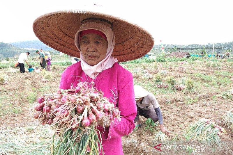 Bantul fasilitasi lelang bawang merah menjaga stabilitas harga panen