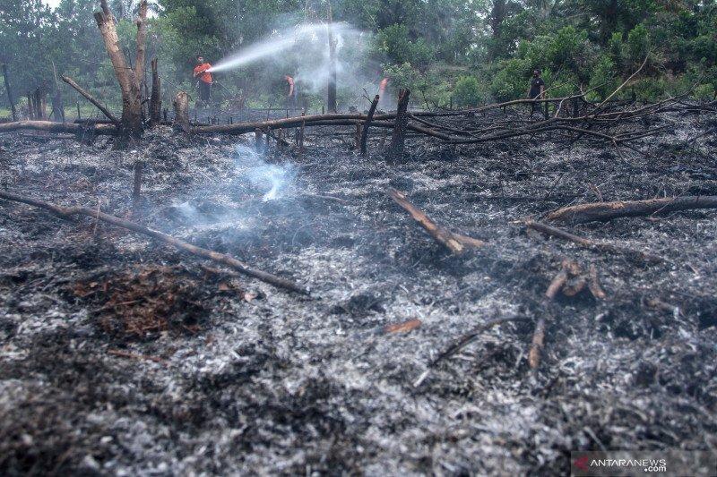 Terdapat 65,33 hektare lahan Pekanbaru alami Kahutla hingga Juli