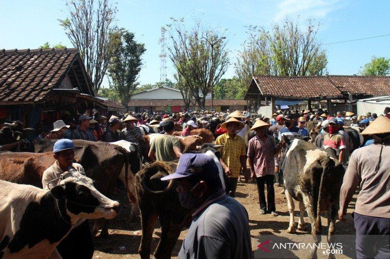 Pasokan sapi di Pasar Hewan Boyolali turun jelang Idul Adha