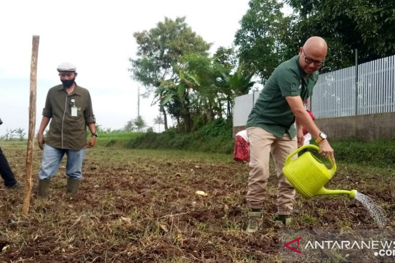 Kota Sukabumi bersiap kembangkan pangan alternatif non-beras