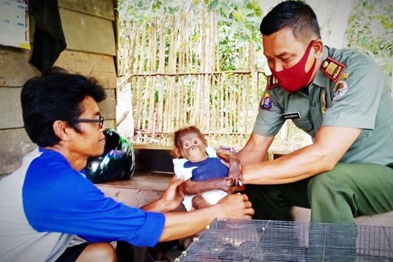 Pemancing temukan bayi orangutan di pinggir Sungai Mentaya