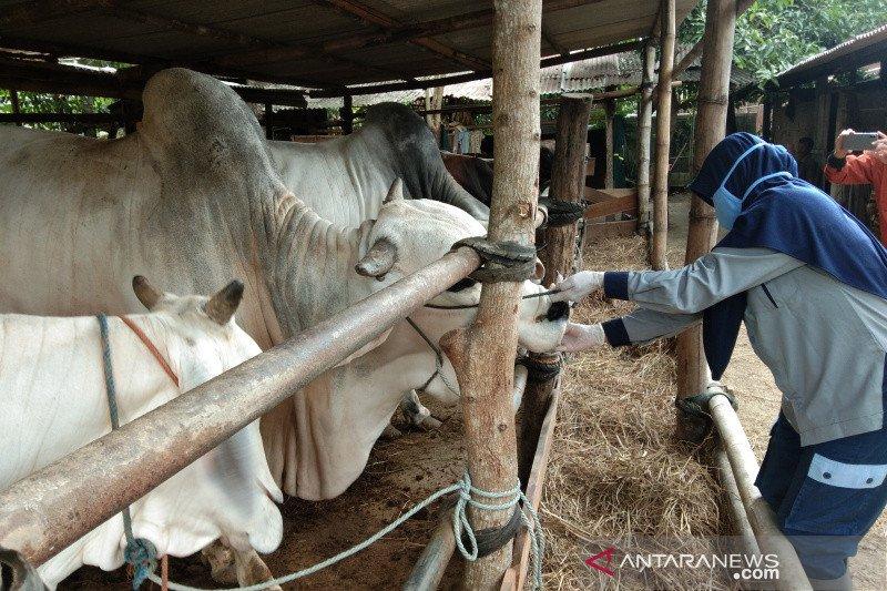 Bantul batasi jumlah orang di tempat pemotongan hewan kurban