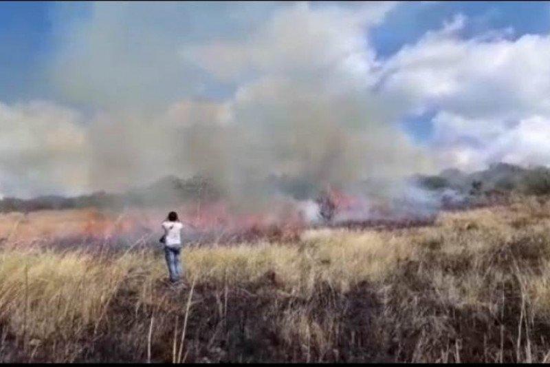 Hutan lindung Egon Ilinmedo di Sikka terbakar