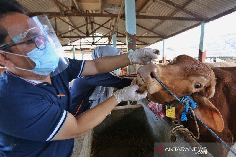 Pemkot Batam pastikan hewan kurban layak potong