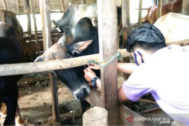 Padang Panjang periksa kesehatan hewan di 104 titik penyelenggaraan kurban