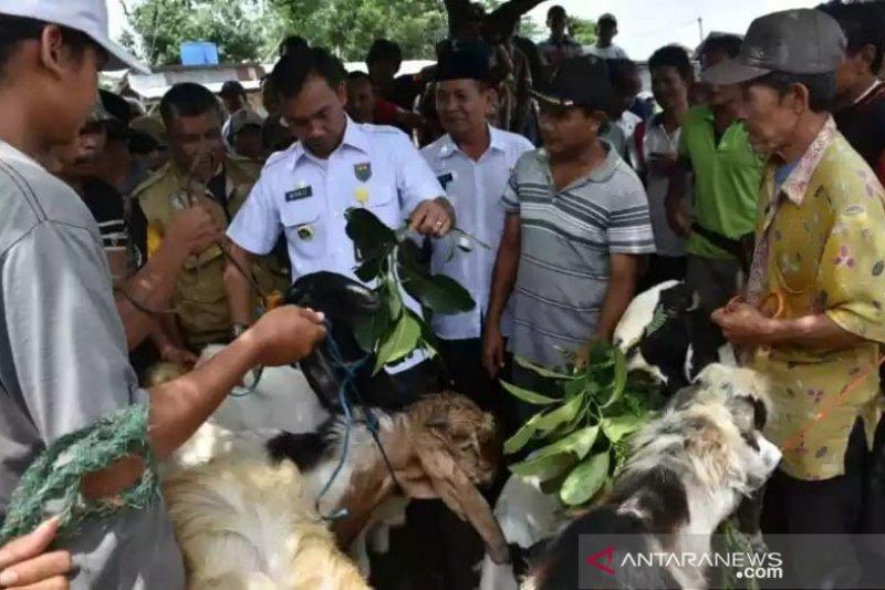 Batang wajibkan pedagang hewan kurban ber-SKKH