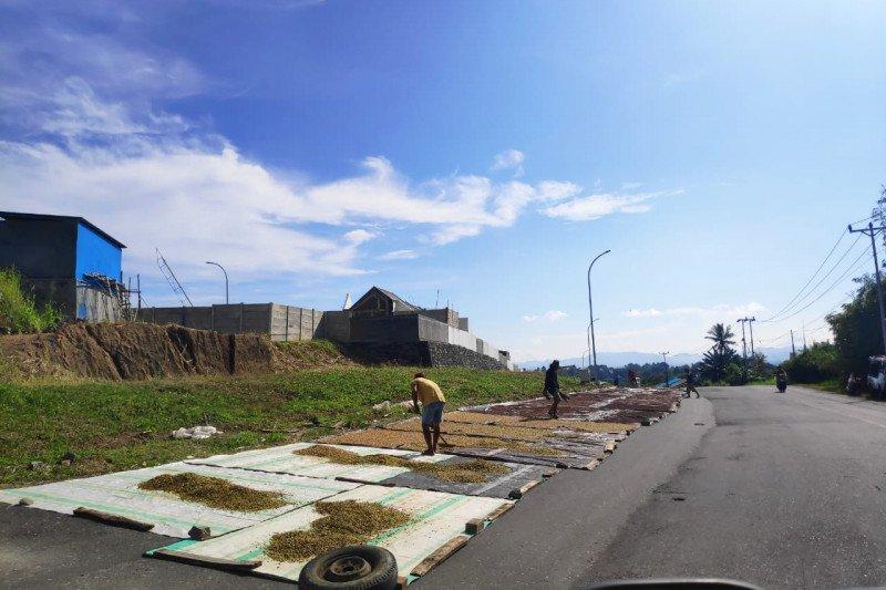 Proses jemur cengkih, petani manfaatkan jalan lebar di Manado