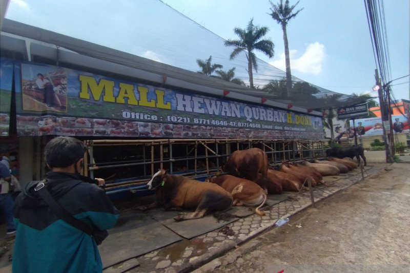 Depok tetapkan standar penanganan limbah hewan kurban
