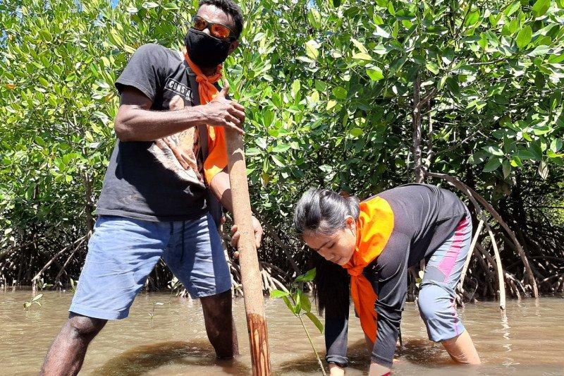 MPA Artsas Hijaukan Pantai Kampung Ambong dengan Bibit Mangrove