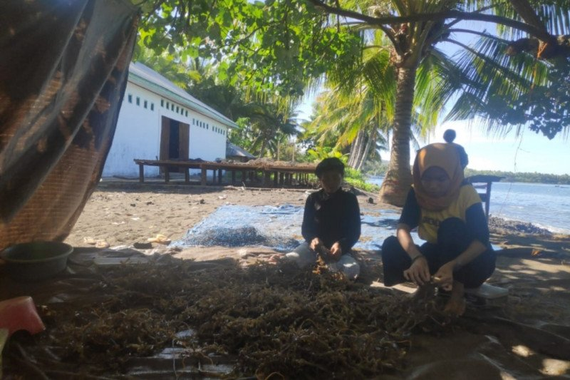 NTT salurkan peralatan budi daya rumput laut untuk 4.050 orang
