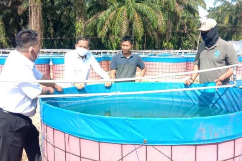 Dinas Perikanan Muba siapkan plasma ikan lele bagi warga prasejahtera
