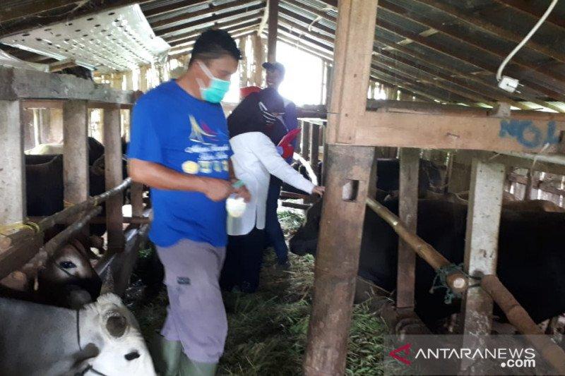 Pemeriksaan kesehatan hewan kurban di Padang Panjang terkendala jarak