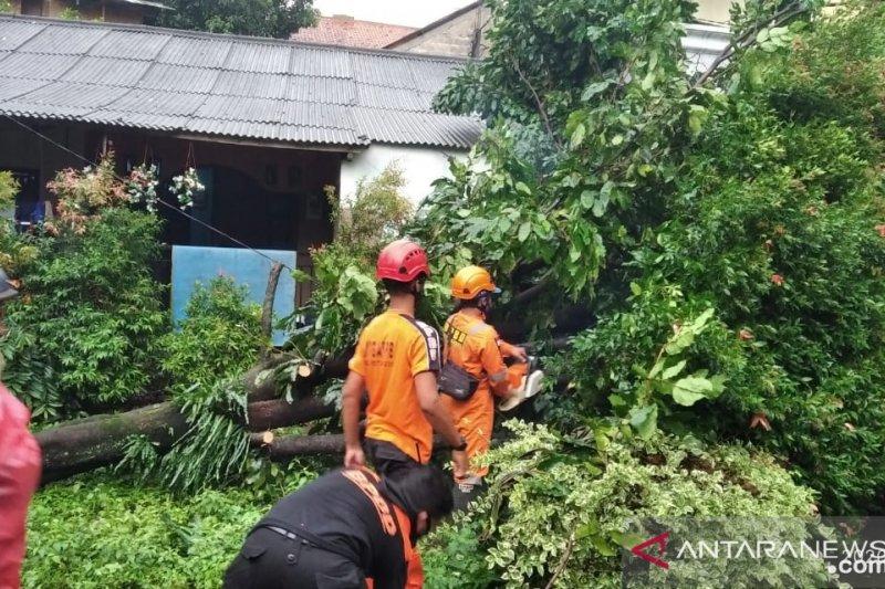 BPBD Kota Bogor tangani bencana angin kencang